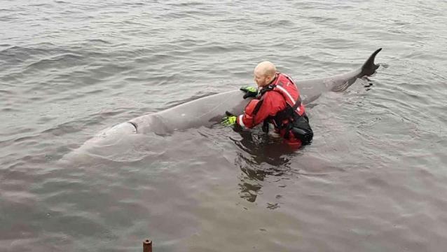 ballena murió con 30 bolsas de plástico en el estómago - lavanguardia.com