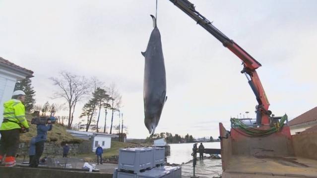 Vídeo: Encuentran 30 bolsas de plástico dentro de una ballena ... - elpais.com