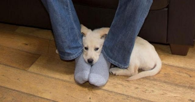 This is why dogs like to sit on your feet - I had no idea! - pawbuzz.com