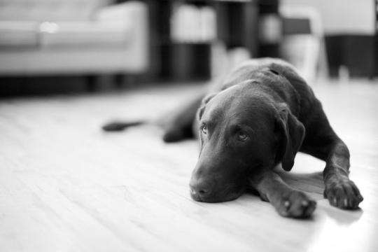 Treating Separation Anxiety in Dogs - thespruce.com