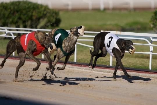 Gambling Deal Could Mean End Of Dog, Horse Racing In Florida ... - wjct.org