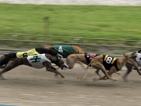 Lawmakers push to 'decouple' greyhound racing from other gambling - jacksonville.com