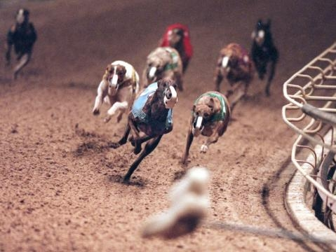 Orange Park greyhound racing deaths at top in the state - jacksonville.com