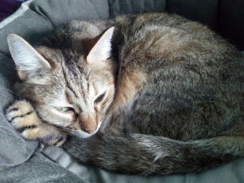 Enigmáticos, caprichosos, juguetones los gatos son una de las mascotas más apreciadas