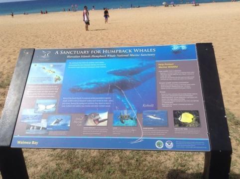 Waimea Bay is a Humpback Whale Sanctuary
