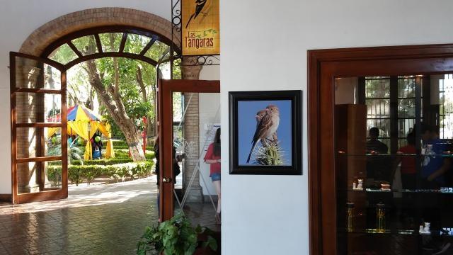 Por un lado los juegos en el jardín interior y por otro la tiendita en el Museo de las Aves.