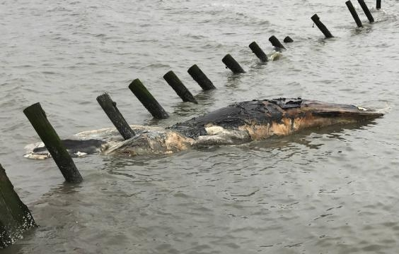 Scientists to review large number of humpback whale deaths   Times ... - timesfreepress.com