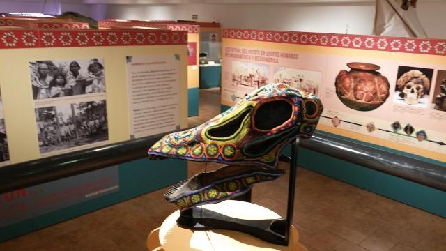 Dedique un rato a vislumbrar la presencia del peyote en la cultura de la región.