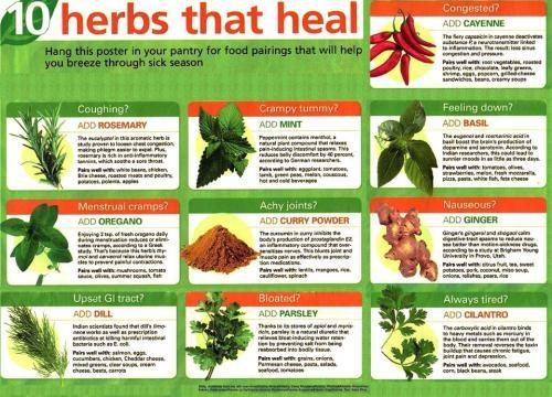 10 Herbs That Heal - celestialhealing.net