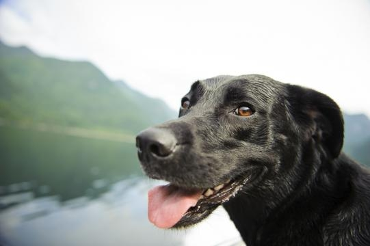How Dogs Can Be Trained To Detect Cancer | Best Health Magazine Canada - besthealthmag.ca