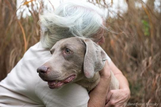 I Photograph The Special Bond Between Old Dogs And The People Who ... - veriy.com