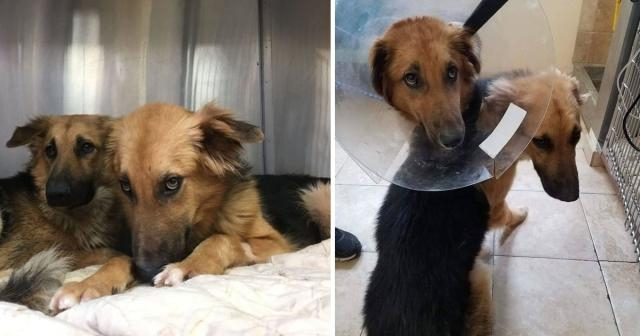 Dog best friends are both abandoned and left at a shelter, refuse to stop ... - shareably.net