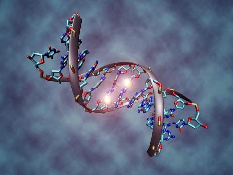 Epigenética, la memoria del ADN - Papel de periódico - papeldeperiodico.com