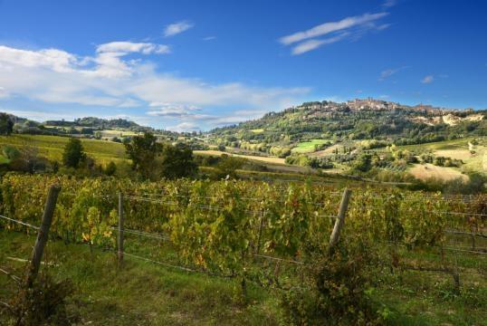 Salcheto Winery, Montepulciano Tuscany.