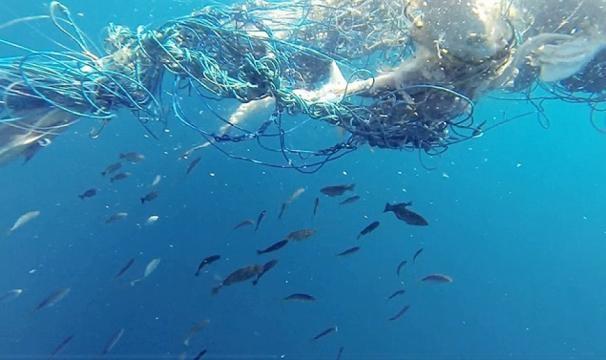 Açores integra consórcio europeu sobre impacto do lixo marinho