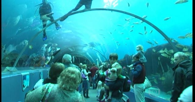Rio tem o maior aquário marinho da América do Sul