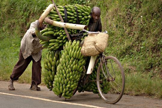 File:Banana-bike.jpg - Wikimedia Commons - wikimedia.org