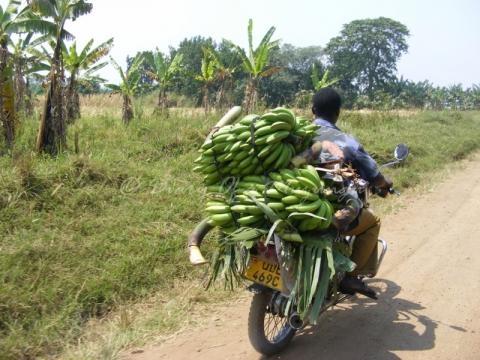 Yes, we have no bananas | Diary of a Muzungu | Uganda & East ... - muzungubloguganda.com