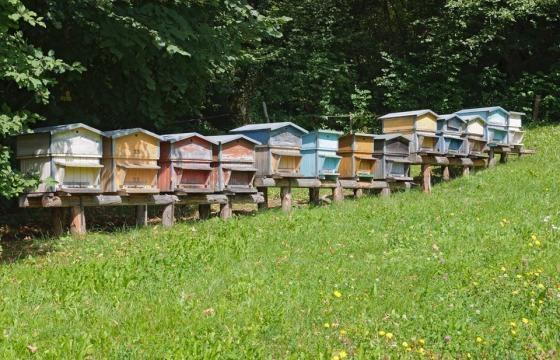 Les meilleurs miels du Sud Est et de Provence sont produits par les abeilles sur des sites à l'abri de toute pollution