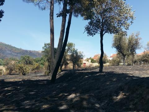 No dia seguinte, Louriçal estava rodeado de cinzas