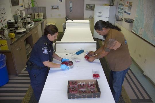 Border Patrol checks at the Otay Mesa port of entry (Credit - Glenn Fawcett – wikimediacommons)