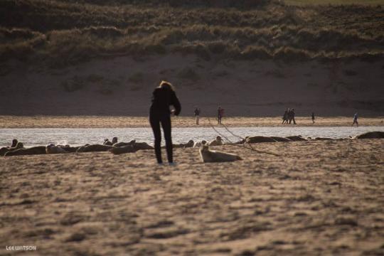 Woman far to close to baby seal despite warnings. Lee Watson, Ythan Seal Watch