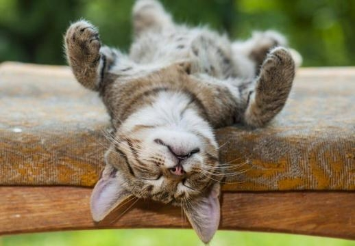 Dormir la siesta correctamente. (via lamenteesmaravillosa.com)
