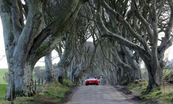 Avenida rodeada de árvores centenárias que serviu de cenário para a Kingsroad