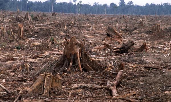Deforestation   Threats   WWF - worldwildlife.org