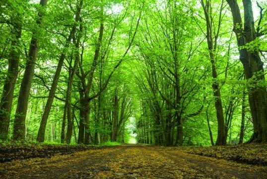 Photo arbres pour illustrer (lebonjus.com)