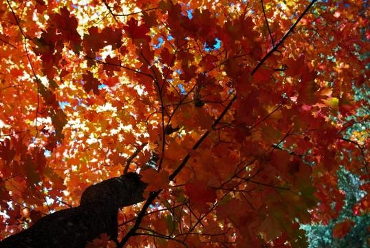 See Those Autumn Colors: Vacation Ideas For Fall Destinations ... - thefuntimesguide.com