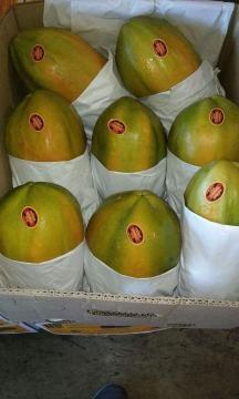 Papaya de empresa Marabella es confiable a consumidores