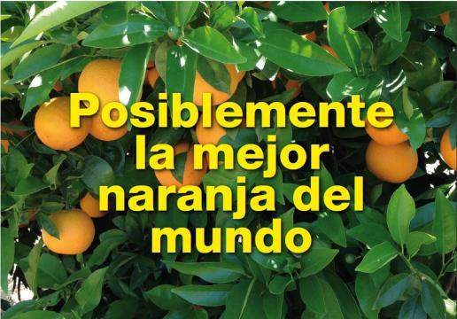 naranjas – Criandonaranjos - criandonaranjos.com