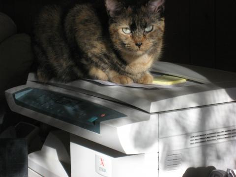 Xerox copier - flickr/mighty free