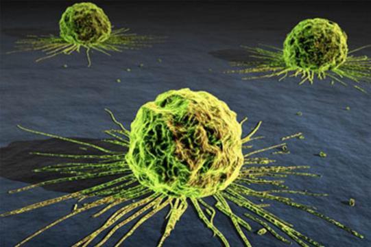 Célula tumoral con sus vasos sanguíneos ya formados alimentándola.