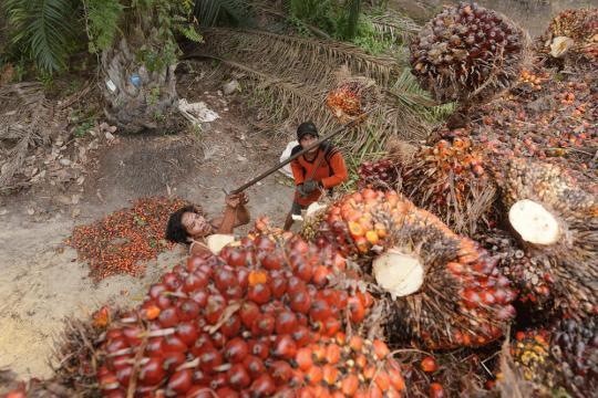 Explotaciones de zonas dentro del hábitat salvaje de orangutanes y otras especies autóctonas.