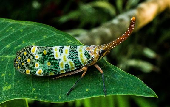 El riesgo de transmisión de enfermedades zoonóticas por comer insectos es muy limitado