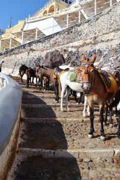 Prefeitura de Santorini decide diminuir o número de turistas por dia para preservar a vida de jegues e mulas, principal meio de transporte
