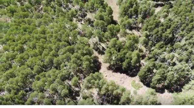 Fishlake National Forest (Pando, The Trembling Giant Aspen Tree) - Utah - June 2018 [Image courtesy – Stavros Mitchelides YouTube video]