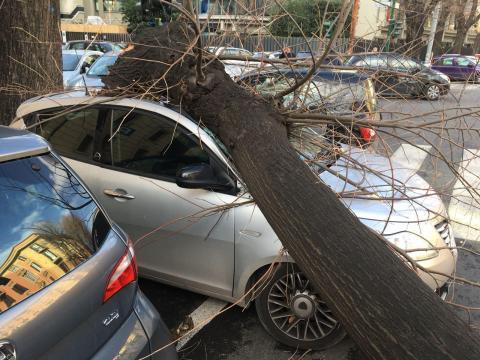 Maltempo, per il vento forte mareggiate e alberi caduti a Roma