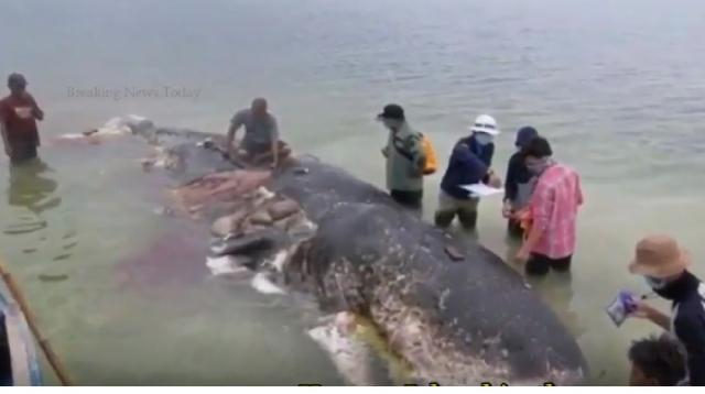 Dead whale had ingested '6kg of plastic'. [Image source/ Breaking News Today YouTube video]
