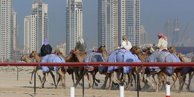 Camel race in front of the Dubai towers (Image credit – Lars Plougmann, Wikimedia Commons)