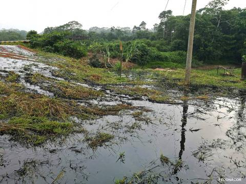 El crudo ha contaminado todo el área natural alrededor de la comunidad indígena. Foto: Observatorio Petrolero de la Amazonía Norte.