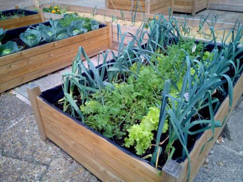 9 razones para convertir tu patio, terraza o jardín en un huerto ... - ecoinventos.com