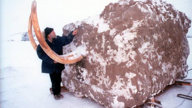 El primer paso hacia el retorno del mamut | Ciencia | EL PAÍS - elpais.com