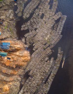 Miles de troncos de madera cortados en un aserradero de la Amazonía peruana. Foto: EIA.
