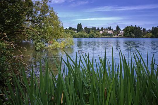 Green Lake in Seattle (Image credit – Steven Pavlov, Wikimedia Commons)