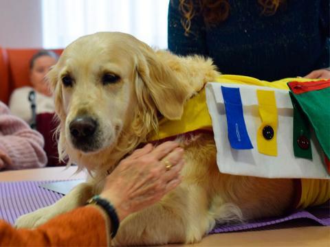 Mr.DOGS - Asociacion de perros de terapia y asistencia de Murcia ... - mrdogs.es