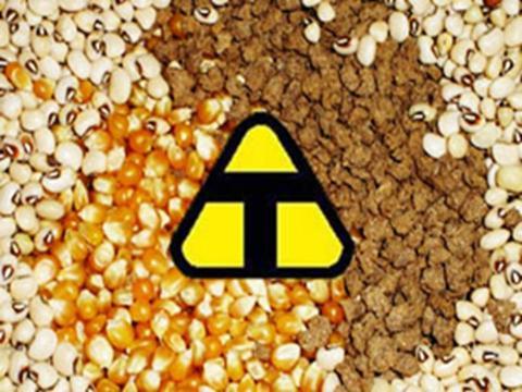 Os alimentos transgênicos são uma espécie de modificação para aprimorar o produto