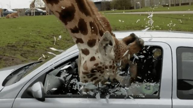 Strider's head surrounded by shattered glass from car window - image credit - MoMedia - YouTube